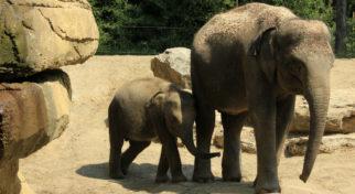 animal-elephant-and-bayby